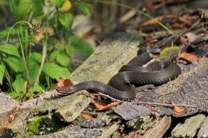 Как избежать укуса змеи: советы отдыхающим